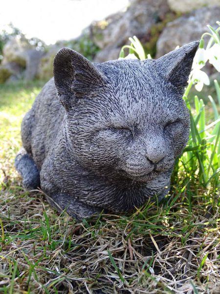 Katze Kleine Molly