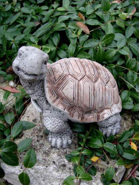Schildkröte Stein
