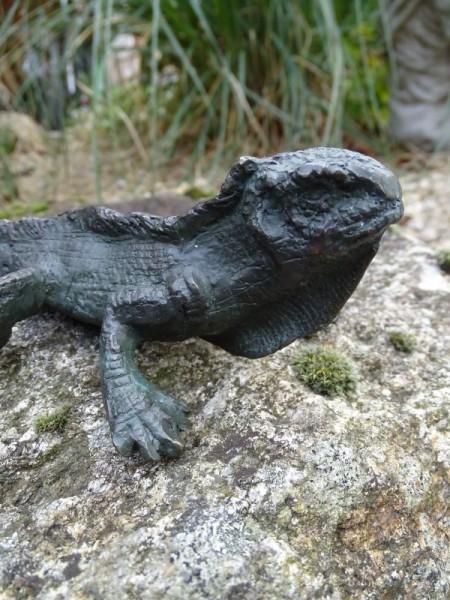 Bronze Leguan