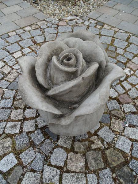 Quellstein Rose
