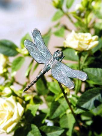 Libelle Bronze