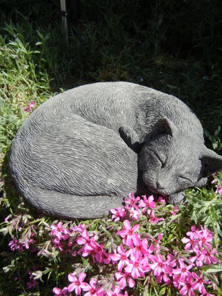 Steinkatze schlafend