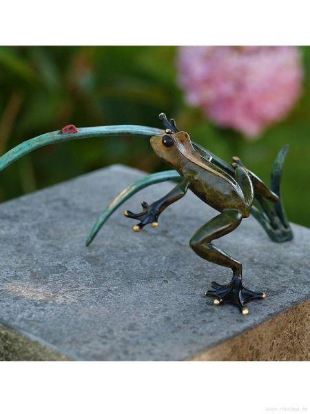 Bronzefrosch auf Schilf